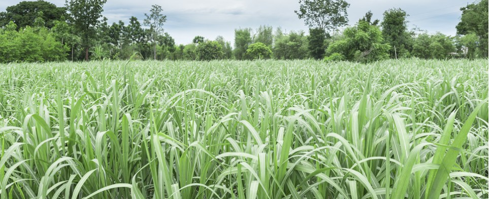 U.S. sugar producers claim foreign government subsidies prevent them shipping export cargo and import cargo in international trade.