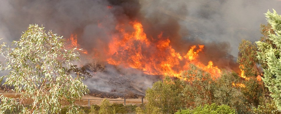 Blue Cut wildfire stopped shipments of export cargo and import cargo in international trade.