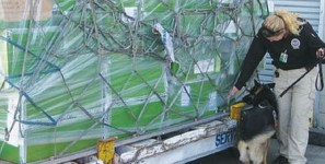 Middle East air shipments of export cargo and import cargo in international trade are subject to new security protocols.