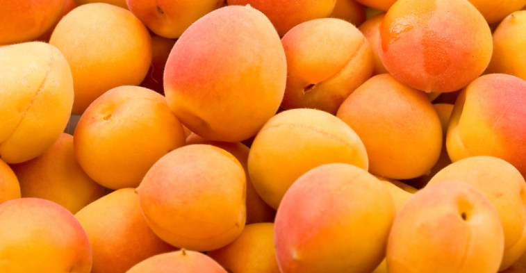 Apricot Market in Eastern Europe - The Growth of Russian Imports Is