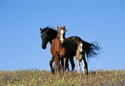 African Horse Disease is spreading, climate change stands as one likely cause