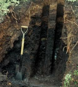 carbonpools_photo7_small