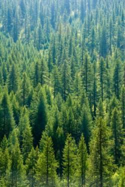 Forest management is not a luxury