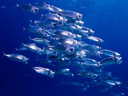 Ocean fisheries will see drastic changes in response to warming oceans