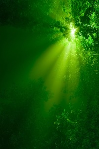 """There is a """"green fog"""" obscuring the reality of energy efficiency, the oil in the Gulf, and from mainstream marketing"""