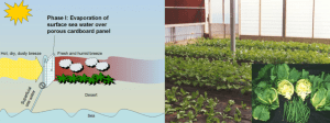 Figure 2. Plants grown in cool, humid conditions thrive on a fraction of the water they would need outside.