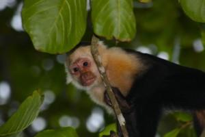 Monkey Global Escape Hatch Panama