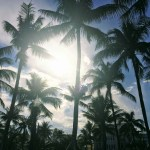 5 Palm Tree Photos to Tide You Over Until Summer
