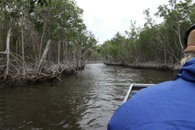 Boottocht in de Everglades