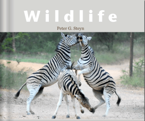 Globerovers Books, Wildlife, Peter Steyn