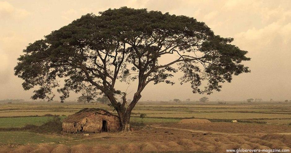 A tree outside Yangon, MYANMAR