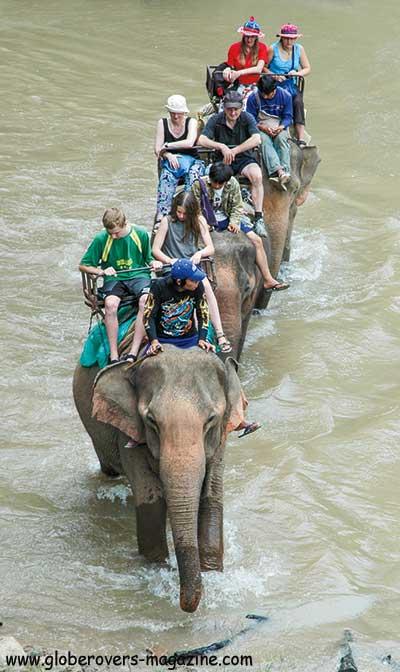 elephant riding Thailand