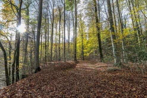 Albishorn-Walt_Travelita