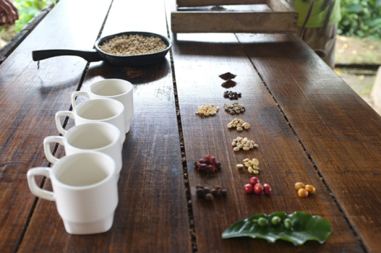 Kaffee-Salento-Kolumbien