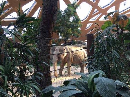 Die Besucher sind hinter den Blättern und Mauern vor den Elefanten wie versteckt