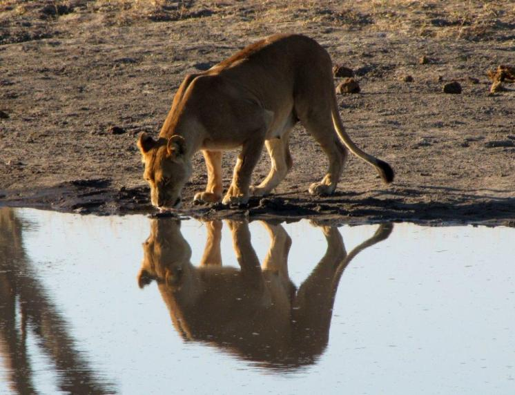 Roadtrip-Zimbabwe-Afrika