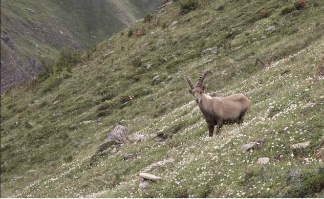 Wanderung Tipp Zermatt Trifthuette - 06
