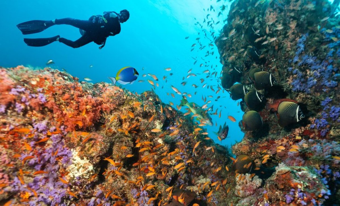 Tauchen Phuket Dive Asia