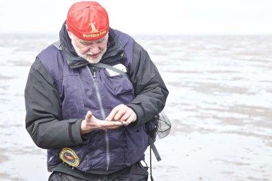 Die Nordsee Kueste Wattwandern 16