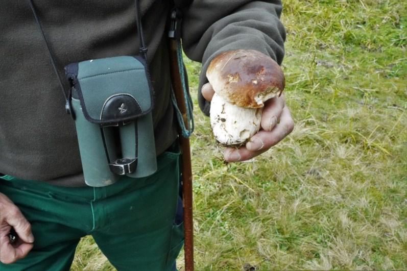 Ein Prachtsexemplar eines Steinpilzes. © Eva Hirschi