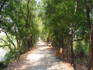 Path by the killing fields