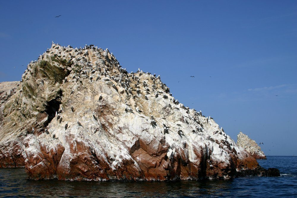 Image result for guano islands