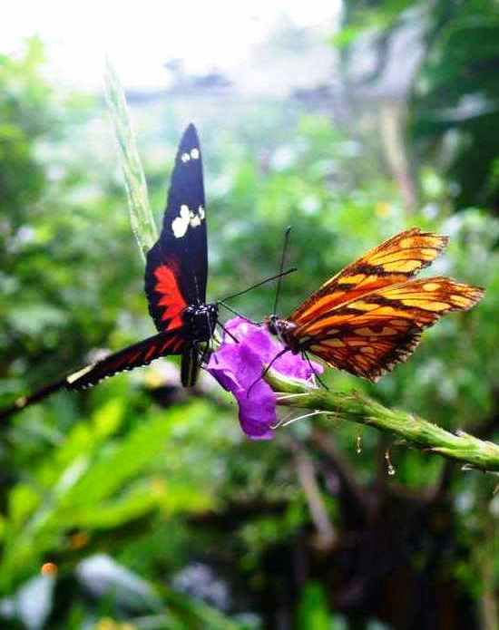 Butterfly-Garden-in-Costa-Rica