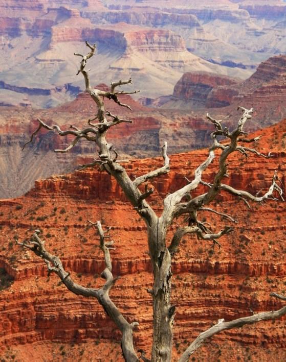 Grand Canyon south rim2