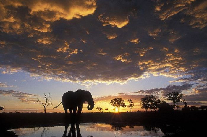 Chobe National Park, Botswana2