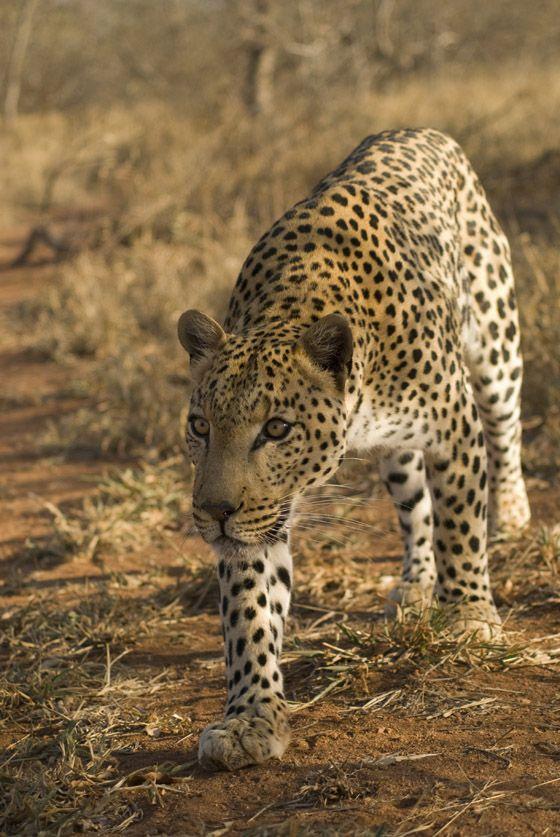 Kruger National Park, South Africa2