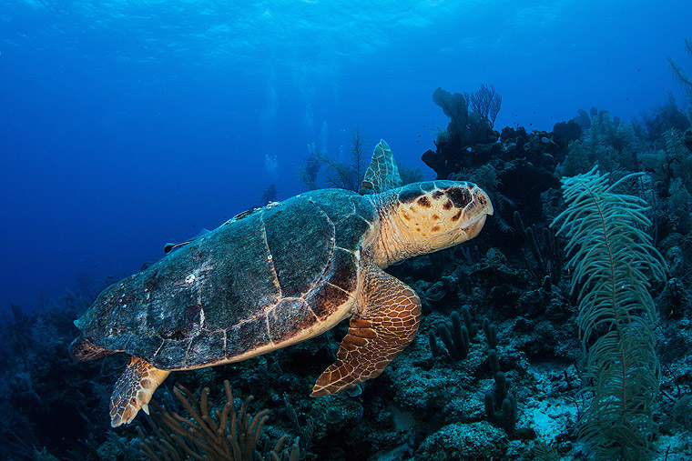Turtle Watching on the Isle of Zante