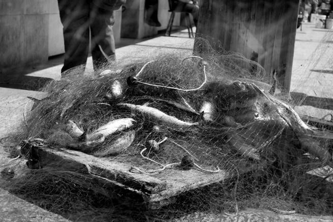 Bari, il pescato