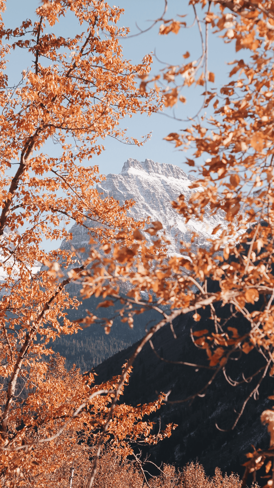 Fall Aesthetic Wallpapers