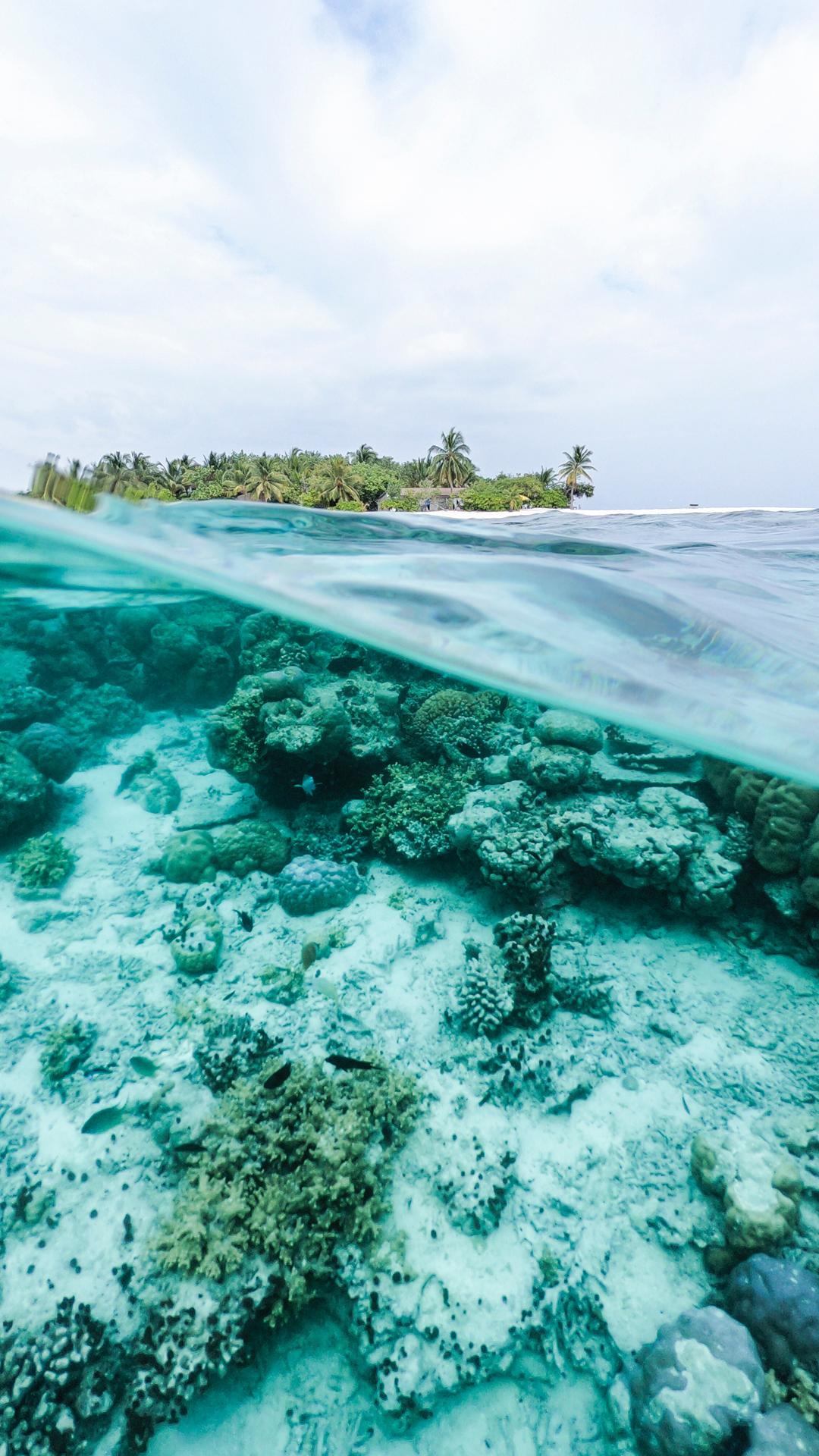 underwater ocean pictures