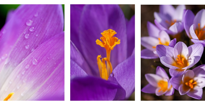 cute purple flowers