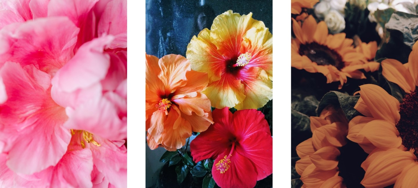 flowers images wallpapers