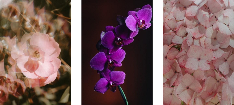 pretty flower wallpapers