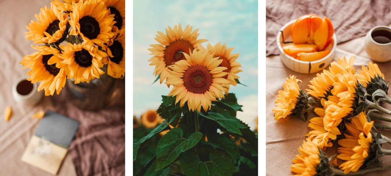 cute sunflower wallpapers