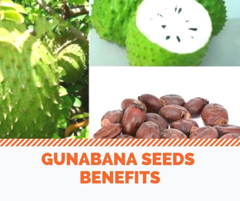Gunabana Seeds Benefits