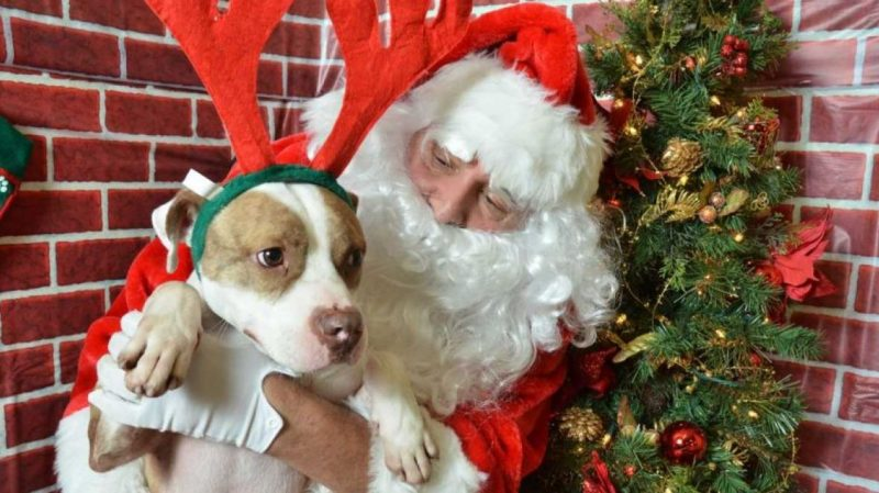 A DOG IS YOURS FOR CHRISTMAS – WAGGY TALES GALORE