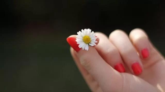 Sposób na gładkie dłonie - dłoń ze stokrotką