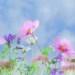 Podsumowanie maja - wiosenne kwiaty