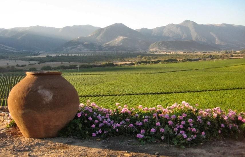 Chilean vineyard.