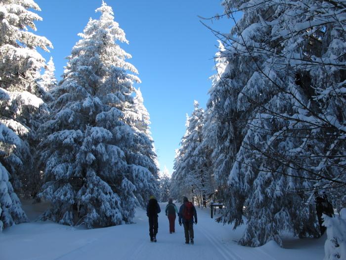 Ein Winterwald wie im Reisekatalog: Versteckt sich hinter den Wipfeln der Gipfel?