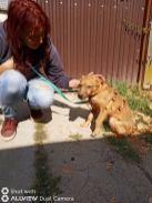 Reisende Hunde 18.09.2020-5