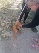 Reisende Hunde 18.09.2020-8