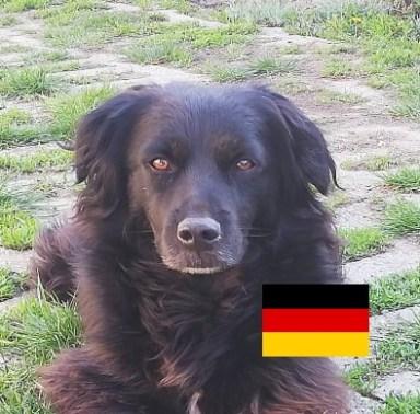 Borisz (lebt auf einer Pflegestelle am Möhnesee)