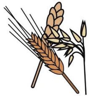 gluten-grains