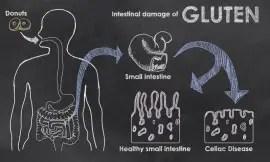 Intestinal_Damage_Gluten