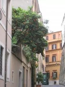 adventures of a gluten free globetrekker Orange trees in Rome